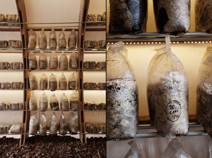西雅图Mushroom蘑菇店设计